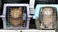 قوانین حمل حیوانات زنده با هواپیما
