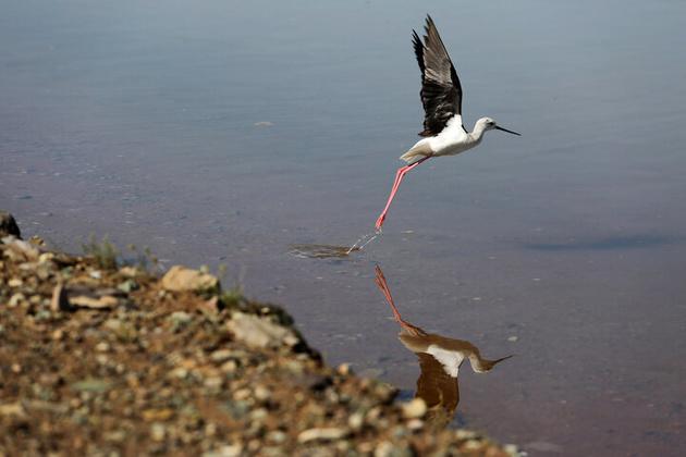 پرواز مهاجران بر فراز تنها تالاب طبیعی قزوین