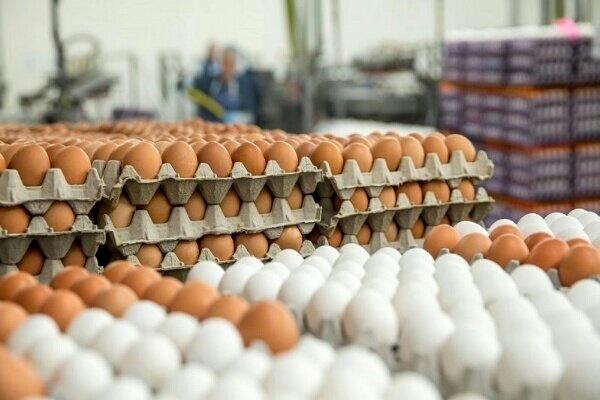 عرضه تخم مرغ با قیمت شانهای ۳۴۰۰۰ تومان آغاز شد
