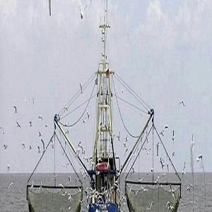 لغو مجوز فعالیت صیادی 16 کشتی ترال در جاسک