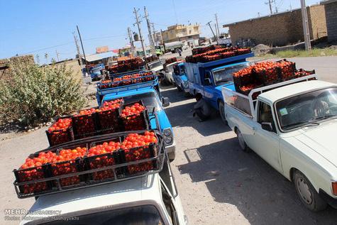 نرخ کرایه حمل محصولات کشاورزی توافقی است