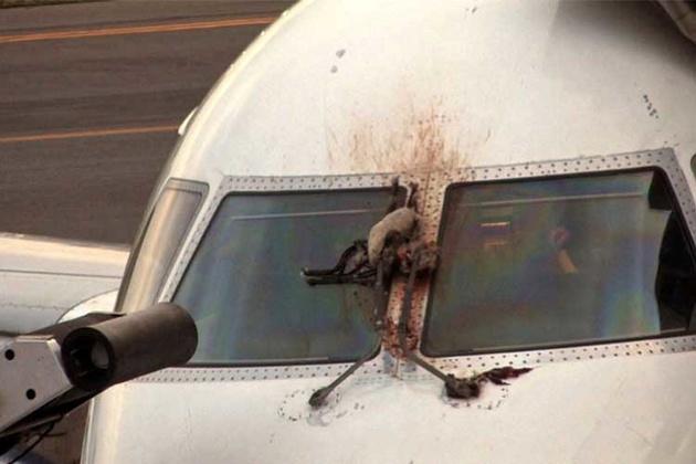 ثبت 105 رویداد برخورد پرنده و حیوان به هواپیما در سال گذشته
