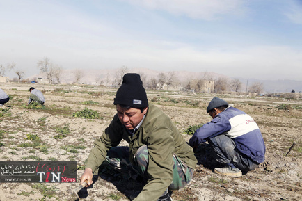 حاشینهنشینان جنوب تهران