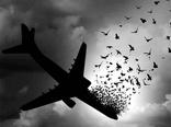 سقوط هواپیمای اوکراینی همچنان مهمترین مسئله کاربران توئیتر