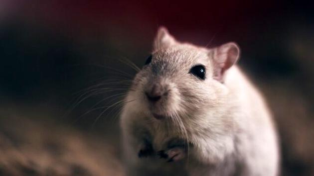 دوربینی که جهان را از دید موشها نشان میدهد!