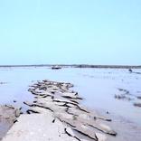 بهسازی محورهای آسیب دیده در سیل خوزستان اولویت بندی می شود