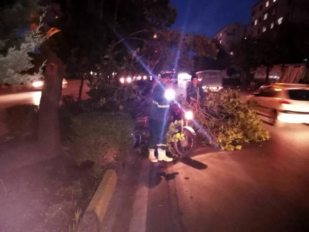 عملیات رفع خطر و ایمن سازی درختان شهر انجام شد