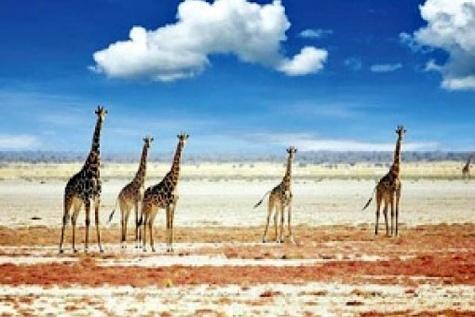شاهکار گردشگری سبز در قلب آفریقا
