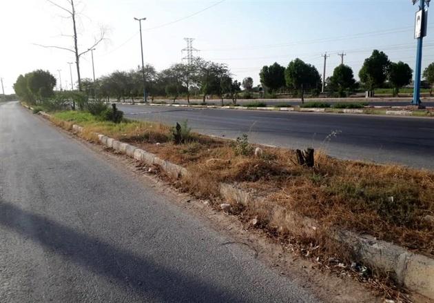 تار و مار درختان جاده کمربندی هندیجان