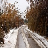 بارش برف و باران در بسیاری از جادهها/ اعمال محدودیت ترافیکی در همه محورهای تهران-شمال