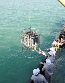 کشف زیستگاه اصلی مرجان های منزوی در خلیج فارس